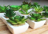 China Beautiful Artificial Green Plants Fake Succulent Plants Pot ISO Standard factory